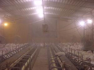 Inside of Poultry Barn